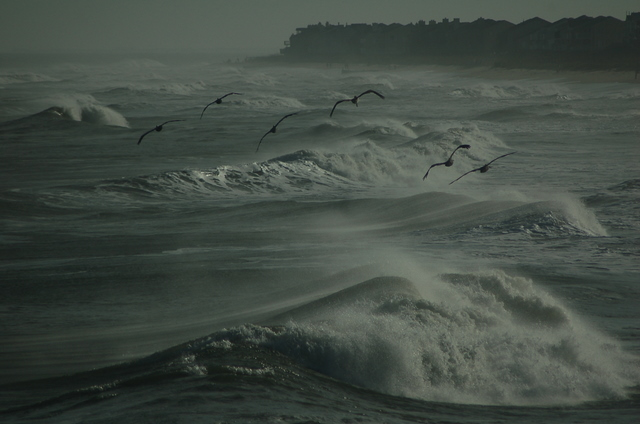 pelicans flying over waves' spray