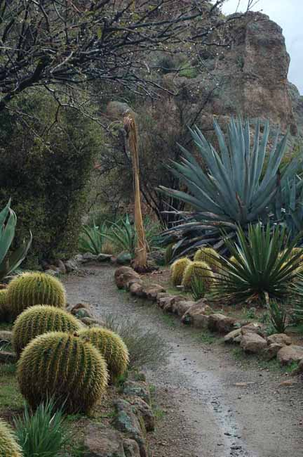 various plants in the cacti garden