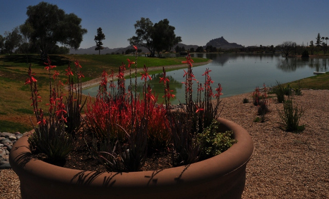 spring in fountain hills