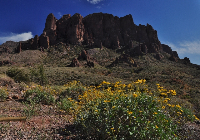 superstition mtn with wildflowers