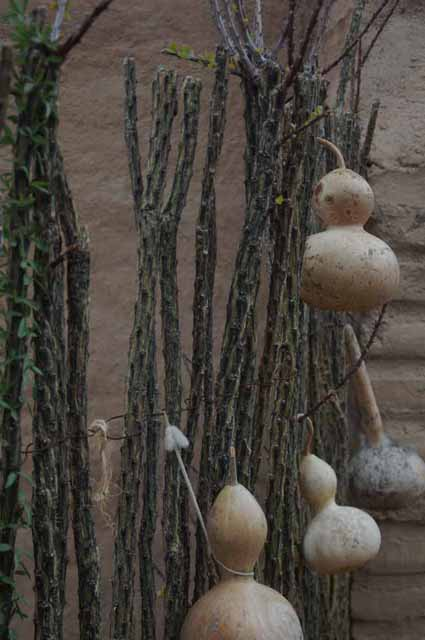Ocotillo fence and gourds