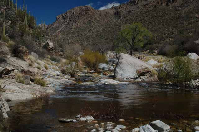 Sabino Creek
