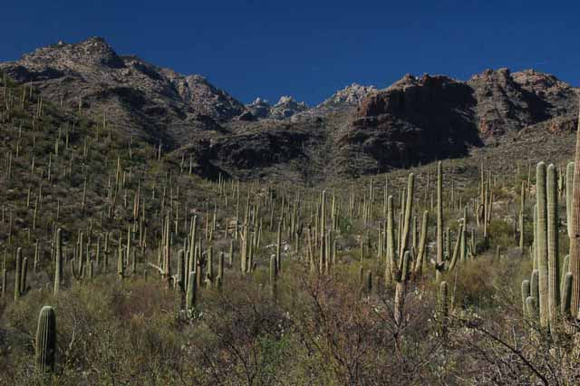 scenic view of cactus in Sabino Canyon