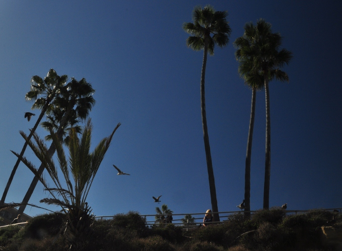 palms in park