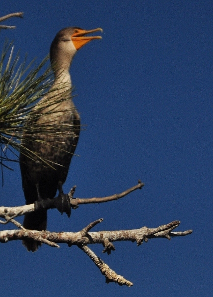 a happy cormorant in a tree