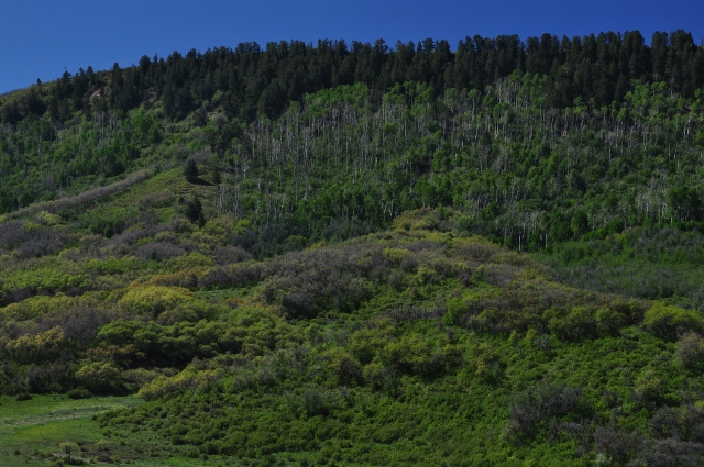 The lucious green hillsides of Highway 160 between Durango and Mancos