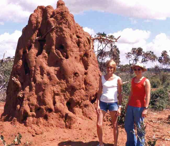 an ant hill at Tsavo West