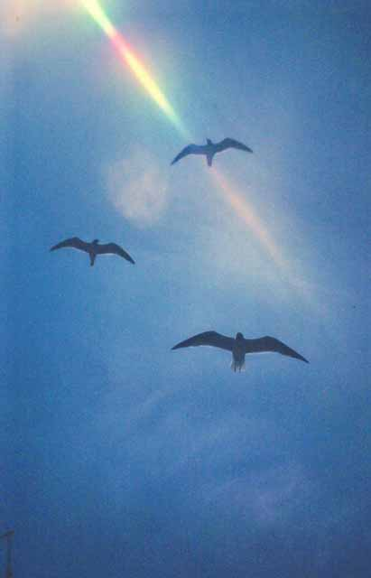 seagulls flying, caught by sunray