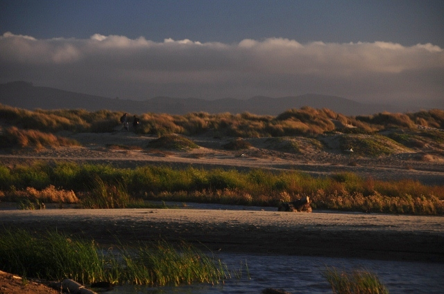 Morro Bay wetlands