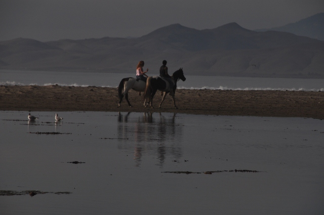 horse riders on Morro Bay beach