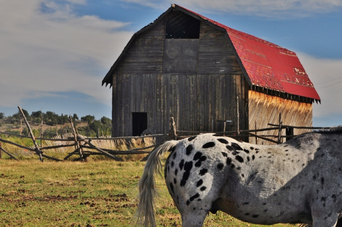horse and barn in colorado