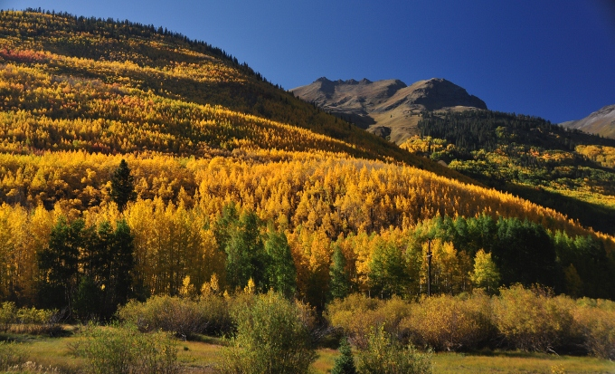 The autumn colors of the hillsides, outside Ouray, Colorado