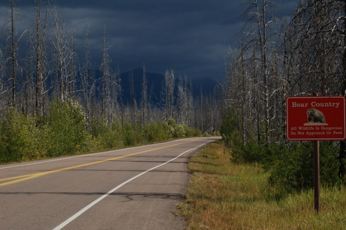 a back road lined with burned trees, Glacier NP