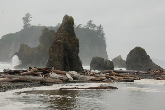 Ruby Beach sea stacks in fog