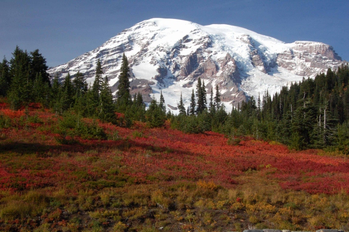 Snow-covered Mt. Ranier with red ground cover in foreground