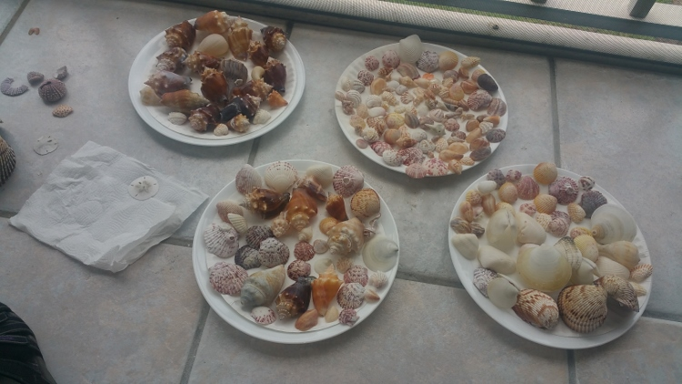 my shell collection