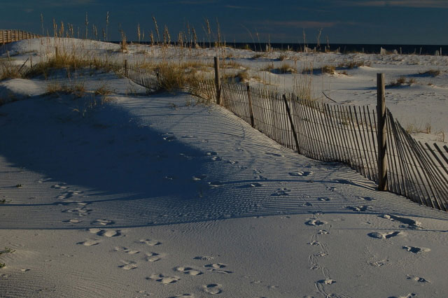 fences help control shifting sand