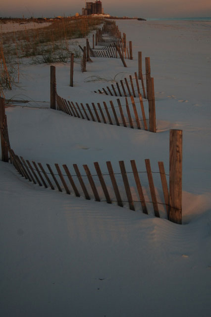 fences control the shifting sand at gulf shores