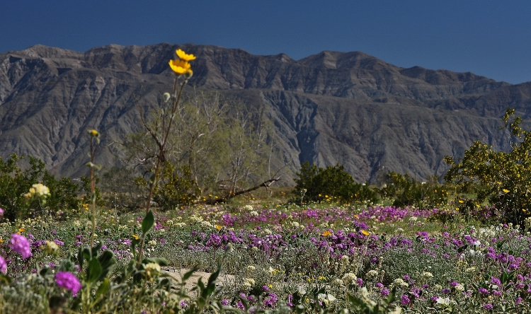 wildflowers against mountains