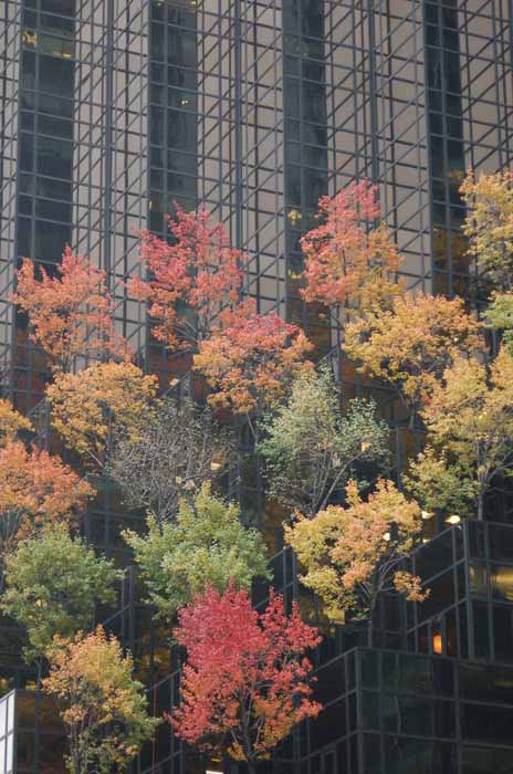 trees add a bit of nature to office building in downtown NYC