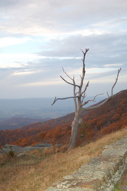 a tree stands starkly against the autumn-colored hills