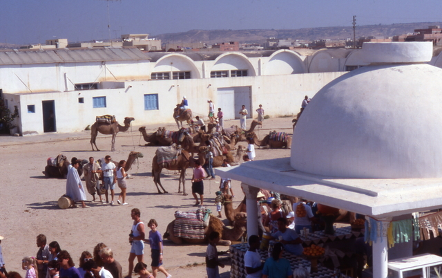 the camel market in Nabeul