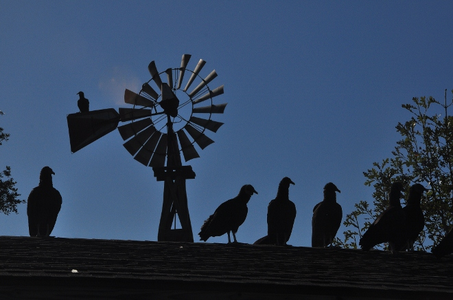 windmill and black vultures