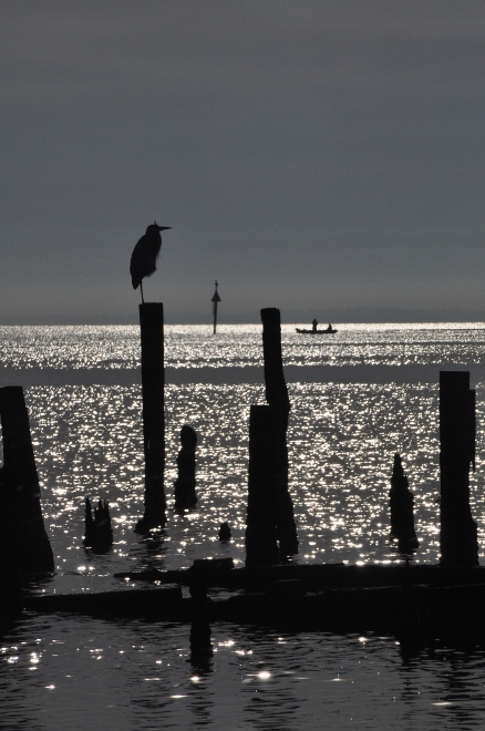 a bird perches on a piling in Galveston Bay at Seabrook