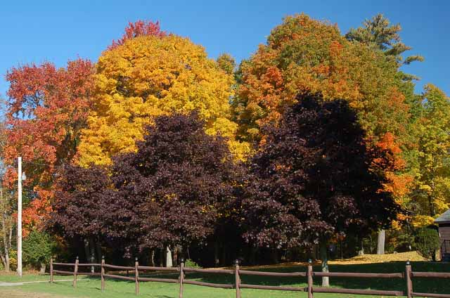 trees of all colors